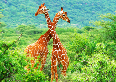 Kenya Travel Safety Tips