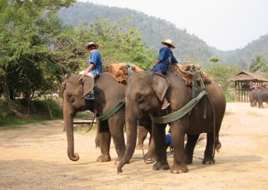 Thailand Travel Wellness Tips