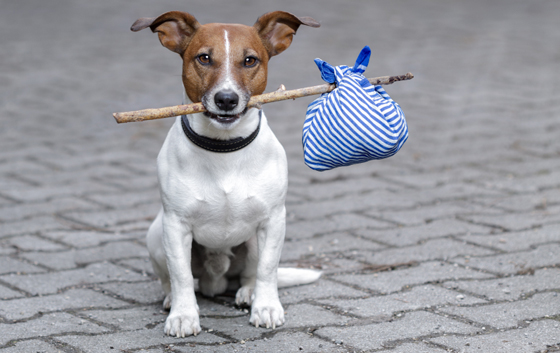 traveling pet - dog with stick and bag