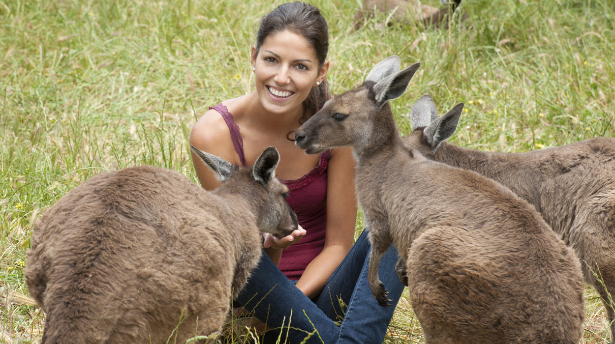 Traveler in Australia with kangaroos