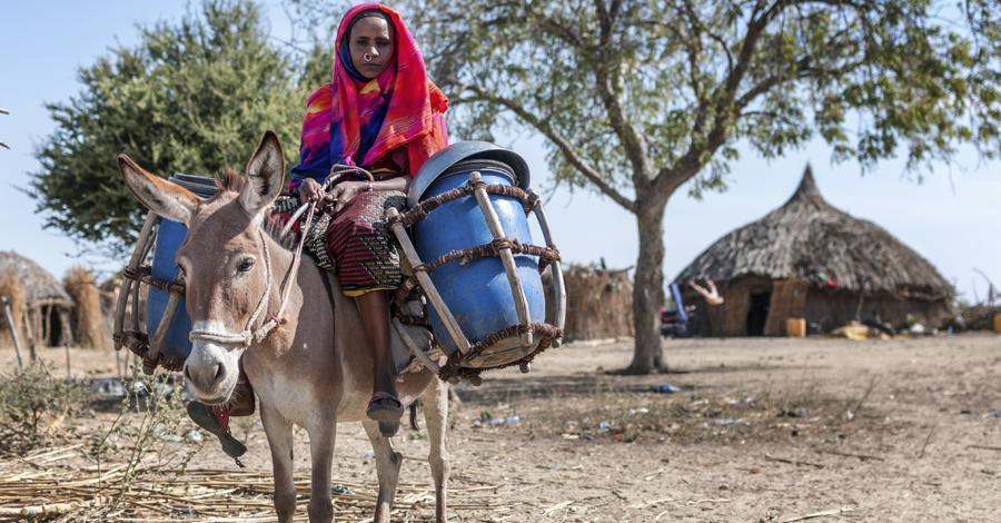 Woman on Mule
