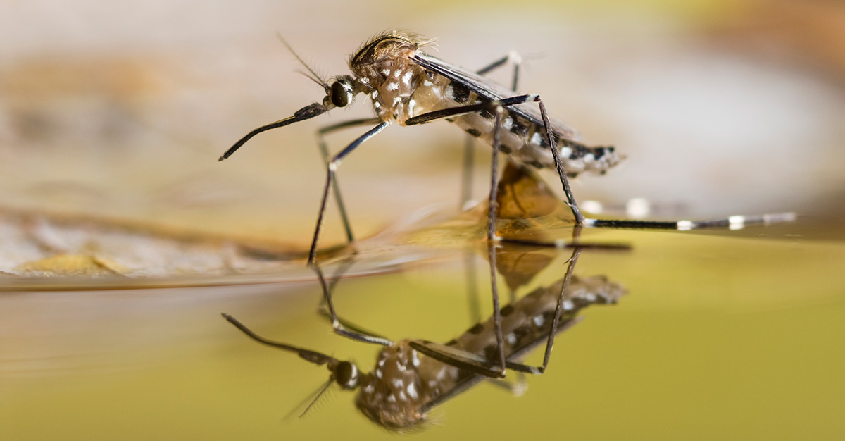 Mosquitoes carry some of the most prevalent, and often dangerous diseases.