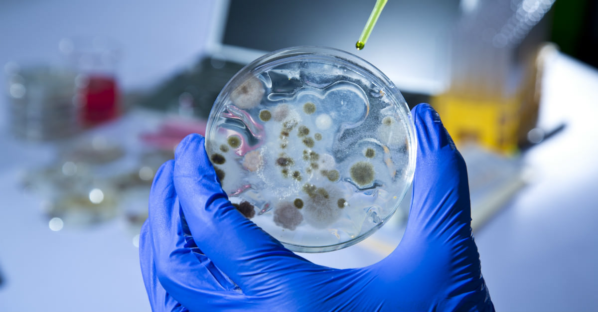Smallpox and Anthrax cases are growing as the world gets warmer.