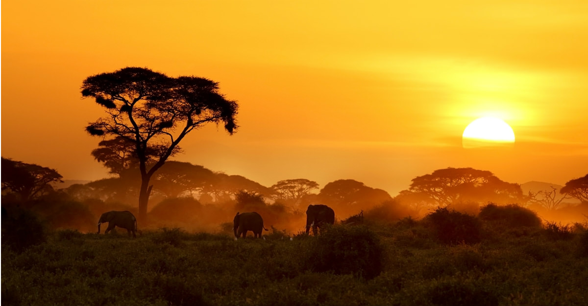 Africa is full of top-notch safari destinations, but no country bests the animal reserves in Kenya.