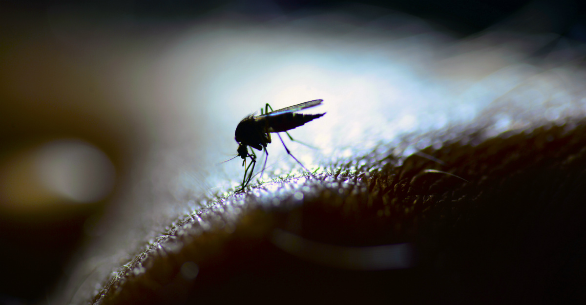 These insects are responsible for many of the world's deadliest diseases.