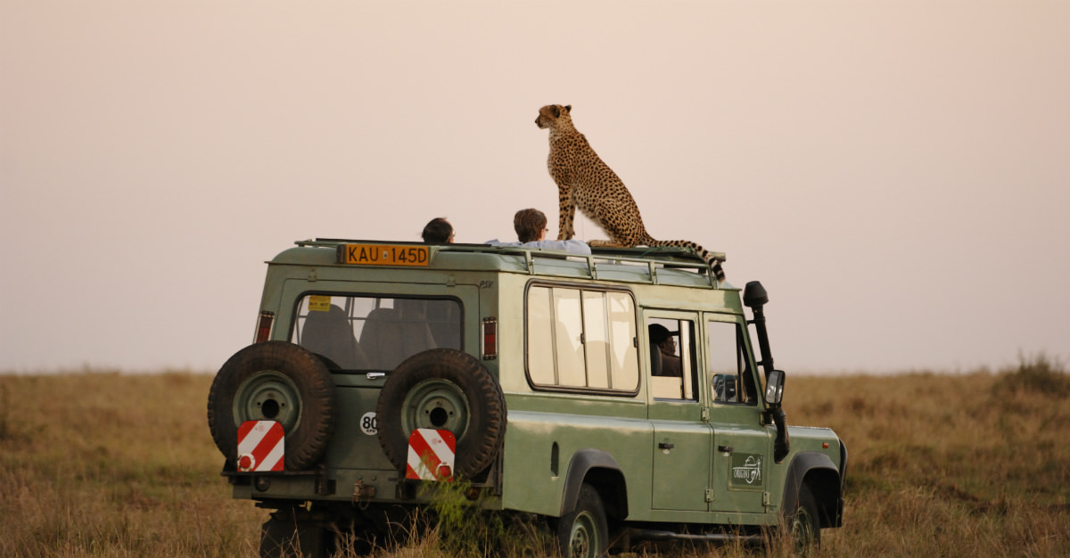 Many of the world's most majestic and terrifying animals can only be seen up-close-and-personal on an African safari.
