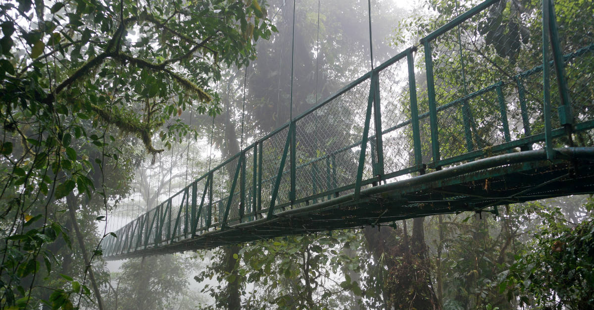 The Moneverde Cloud Forest Reserve looks like something out of a Hollywood blockbuster.