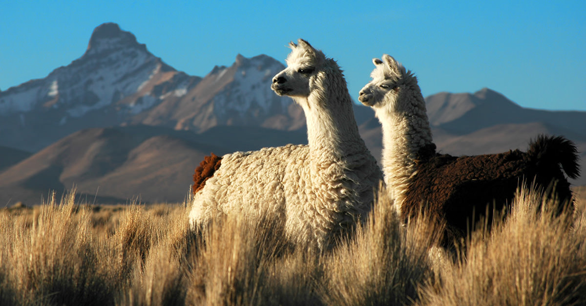Travel safely to Bolivia with Passport Health's travel vaccinations and advice.