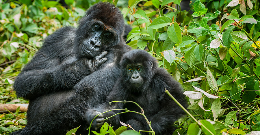 DR Congo has a wide variety of animal life and tourist activities. Make sure you explore them safely with travel vaccines and advice from Passport Health.