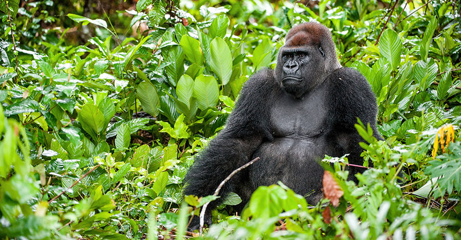 Gabon's wildlife is just one reason to visit the country.
