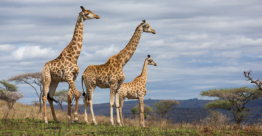 From safaris to huge cities, South Africa has so much to experience. Make sure you explore them safely with travel vaccines and advice from Passport Health.