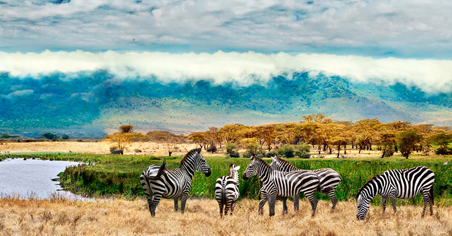 Uganda offers safaris, wildlife and more to travelers.