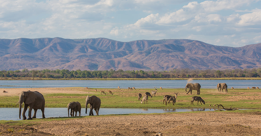 Elephants and more covers the popular destination, Zambia.