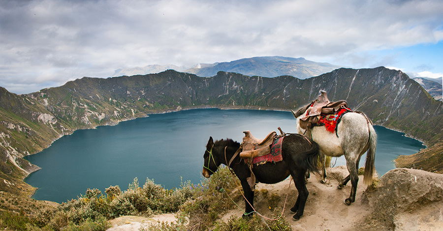 From the Galapagos to the Andes, Ecuador has much to offer.