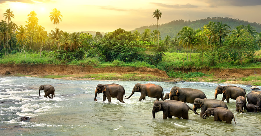 Sri Lanka has much to offer travelers.