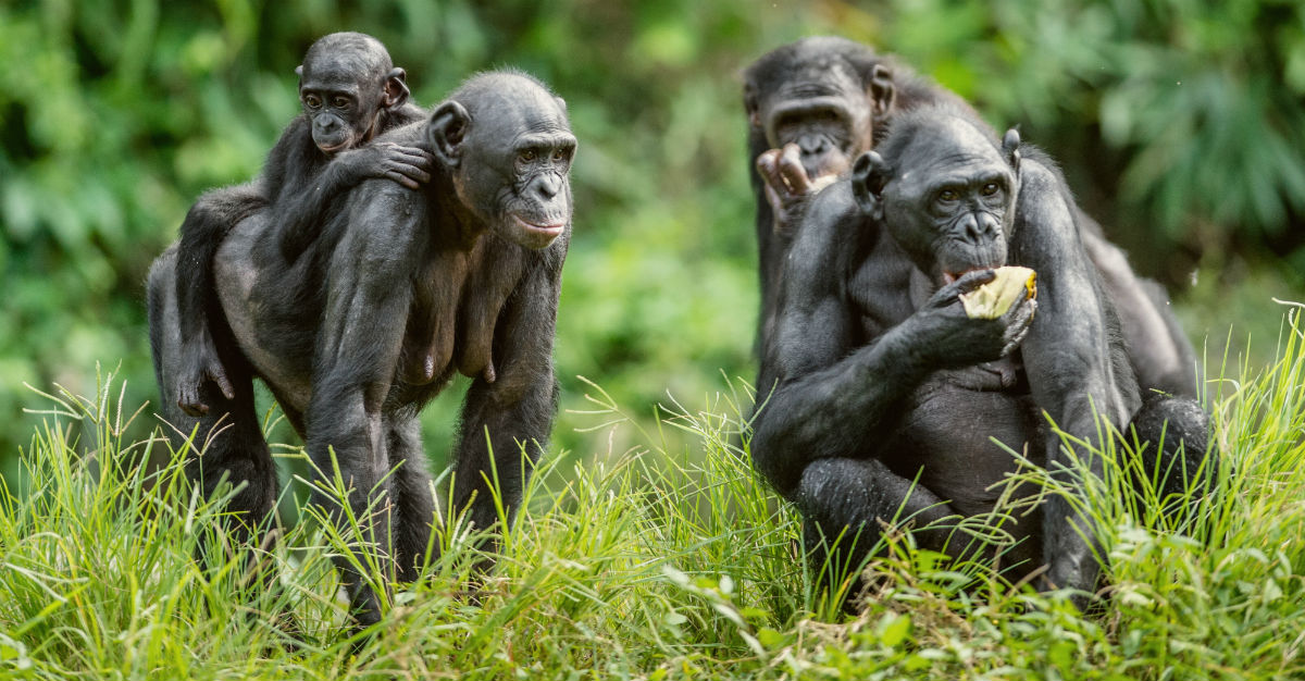 It may get less attention than similar diseases, but monkeypox poses problems in Africa.