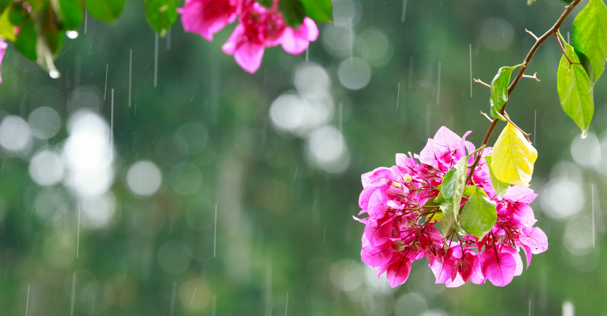 Many exotic places blossom when the weather gets wet.