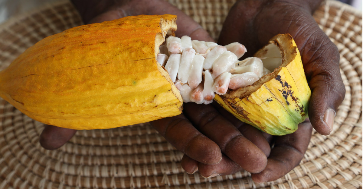 Cocoa beans and nutmeg are not in short supply throughout Grenada.