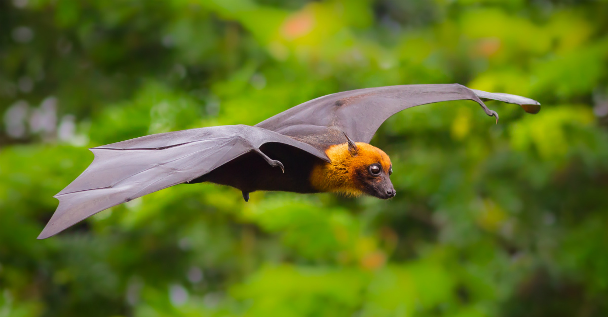 More than a dozen people have died in India from the bat-borne virus.