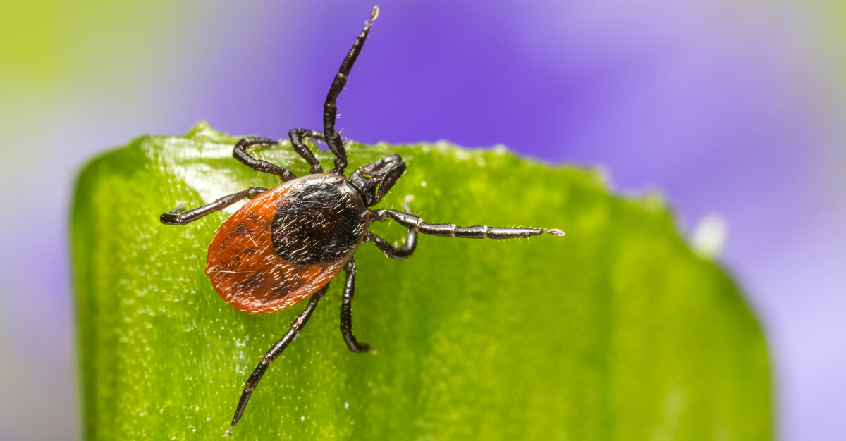 Some bad luck may be the reason we don't have a vaccine for Lyme disease.