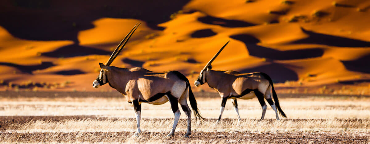 A visa is required for entry into Namibia. Get your's today!