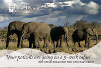 Elephants Postcard