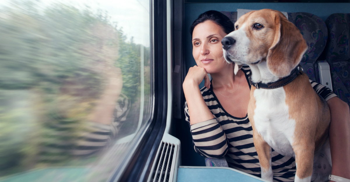 Just because you're traveling doesn't mean your pet has to stay home.
