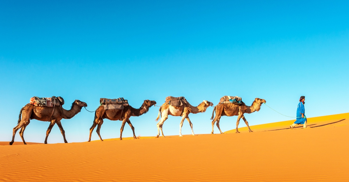 A new study reveals the source of MERS.