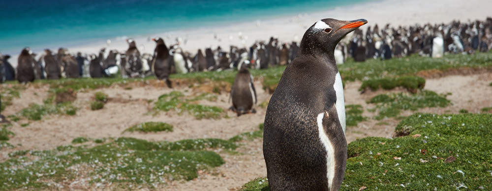 Penguins are all over the Falklands! See them and more while staying healthy with the help of Passport Health's travel vaccine services.