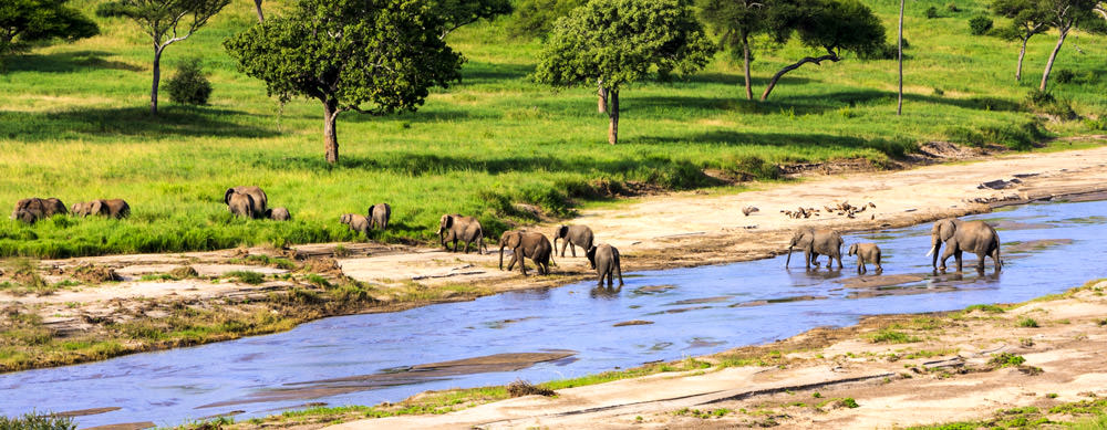 Safaris and wildlife are just two reasons to visit Tanzania. Travel safely with the help of Passport Health and its premier travel vaccination services.