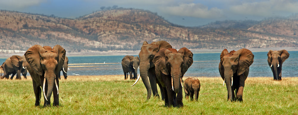 Wildlife and safaris are a major reason to visit Zimbabwe. Enjoy them to the fullest with travel vaccines and advice from Passport Health.