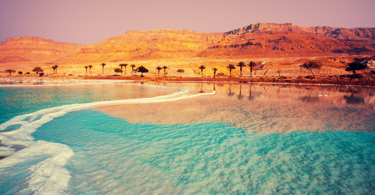 Palm trees line the beaches of the Dead Sea.