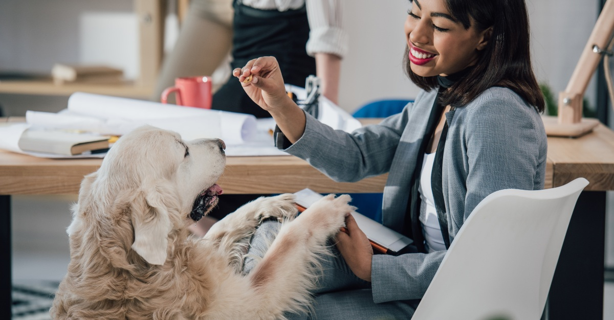 An office dog can also improve physical health through happiness.