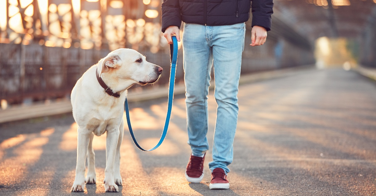 Taking a dog on walks is one scheduling downside of an office pet.