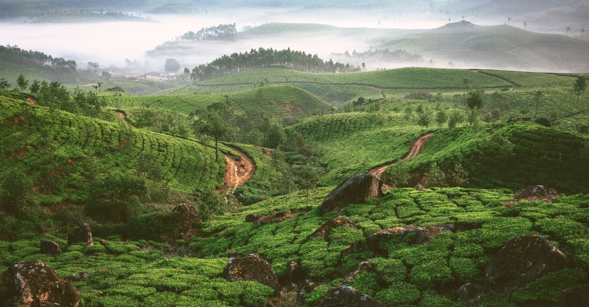 The wondrous plantations fill the outskirts of Sri Lanka's cities.