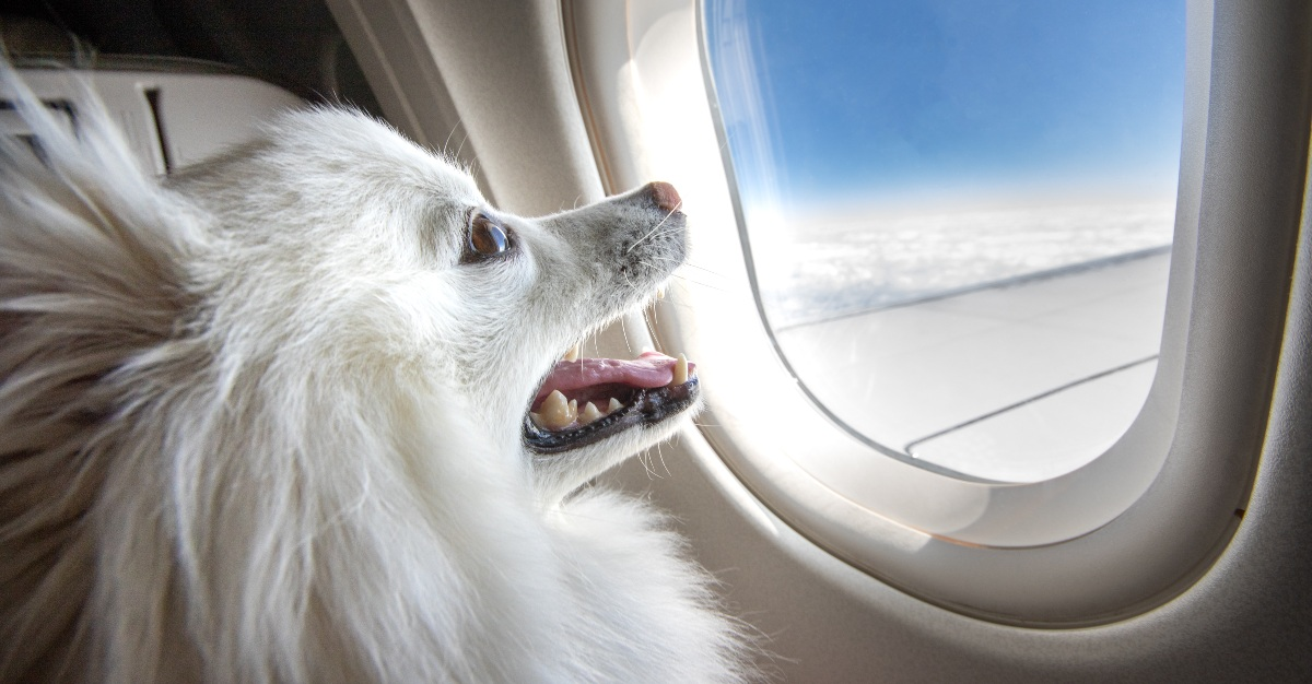 Before taking your pet abroad, make sure to get all the necessary documents.