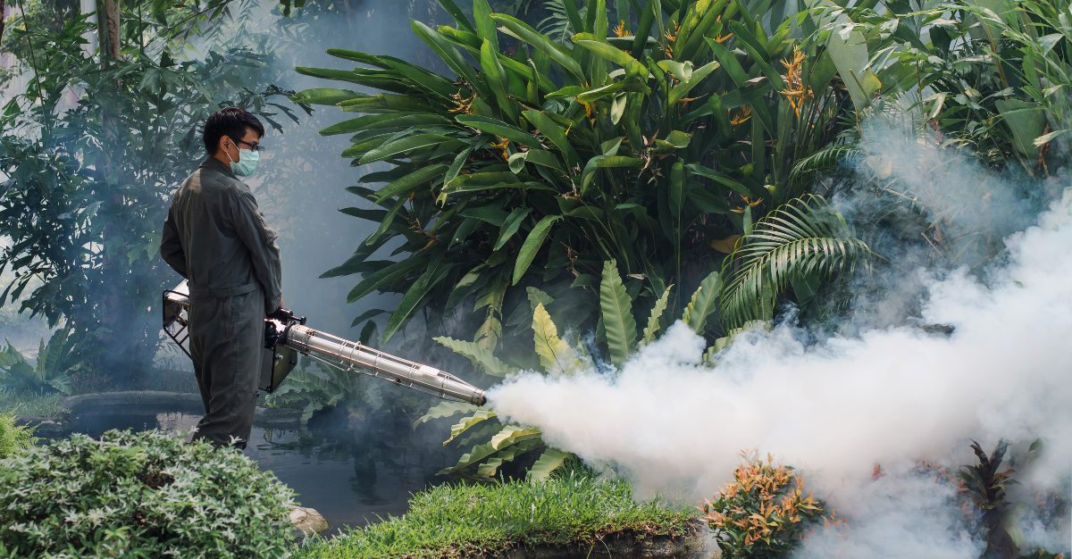 Chikungunya cases spiked in Thailand as 2018 ended.