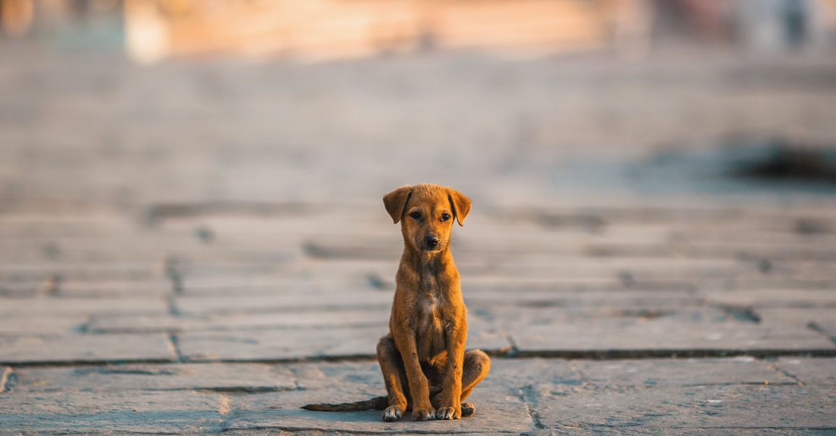 After petting a stray dog in India, a Virginia woman died from rabies.