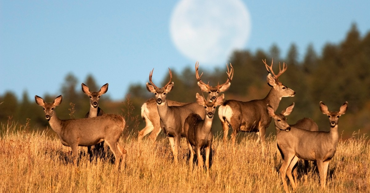 The previously newsworthy Zombie Deer Virus has only spread more in the United States.