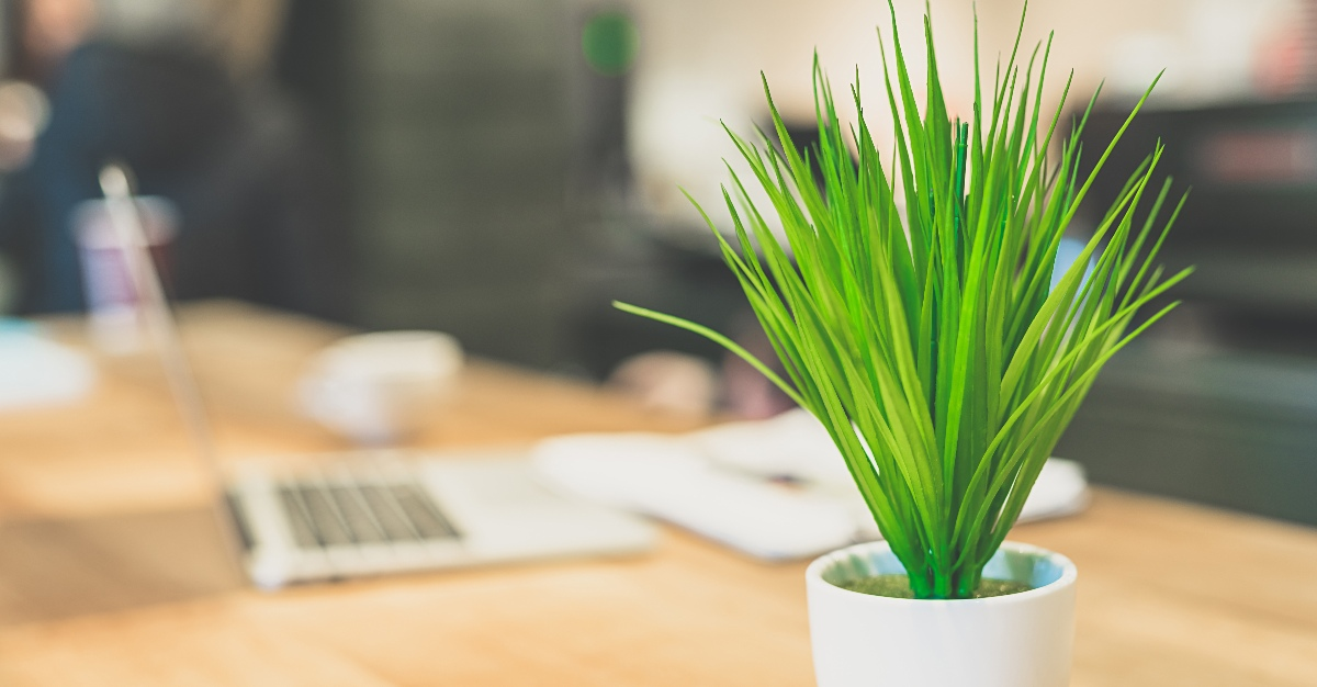 An office plant may seem small, but it can actually offer many physical and mental benefits.