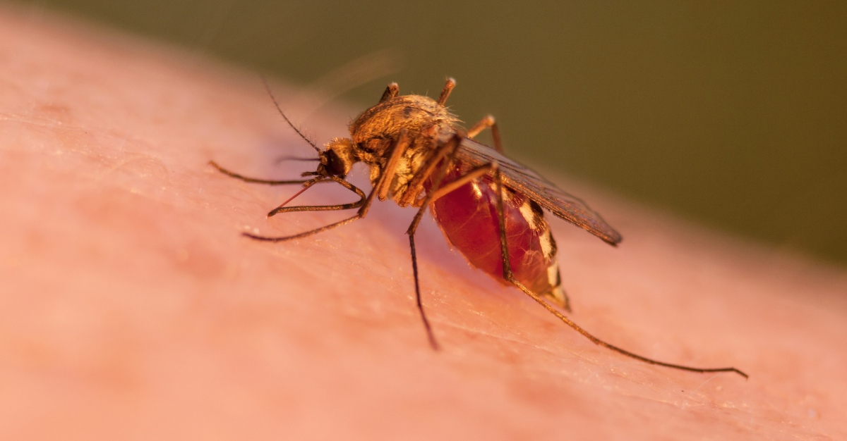 Researchers found a few new keys to help treat deadly cerebral malaria.