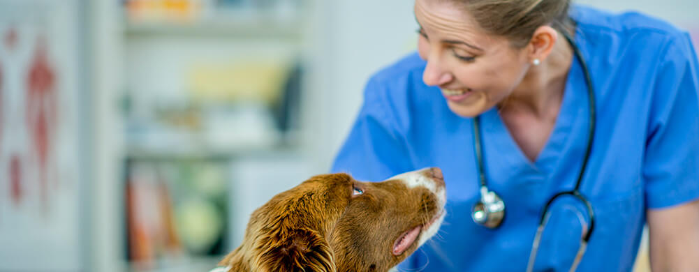 Veterinarians are at an increased risk of exposure to rabies and other infections.
