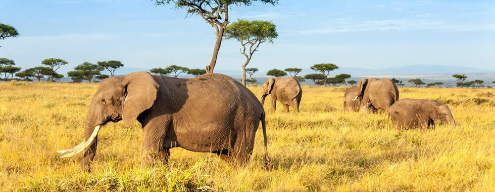 Safaris and wildlife are just two reasons to visit Kenya. Travel safely with the help of Passport Health and its premier travel vaccination services.